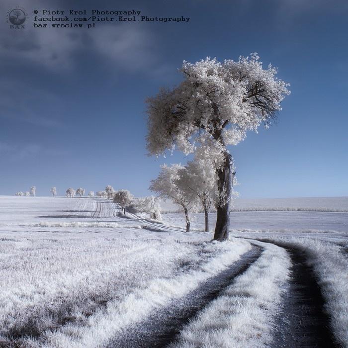Winter in summer