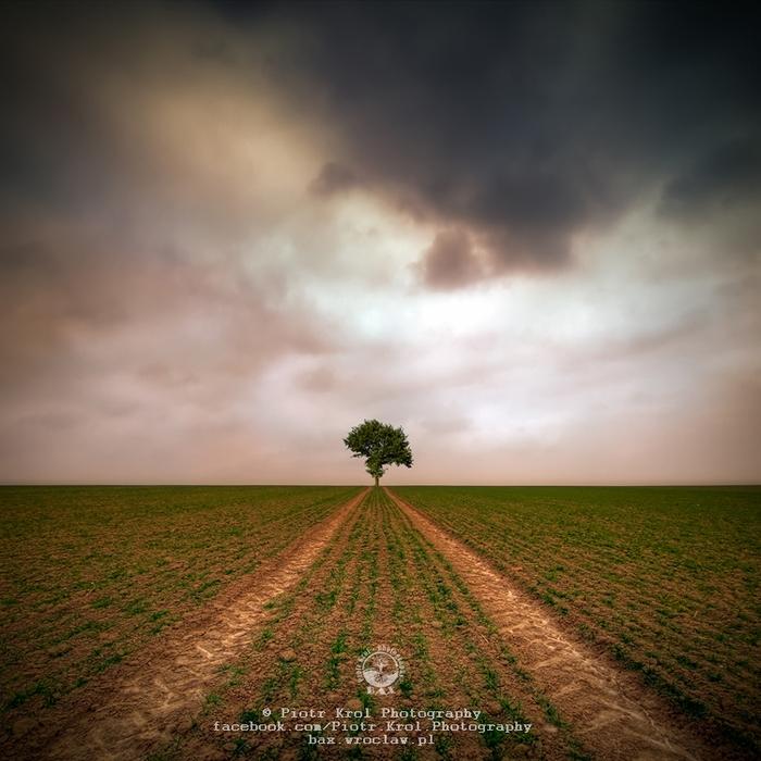 2010-Tree