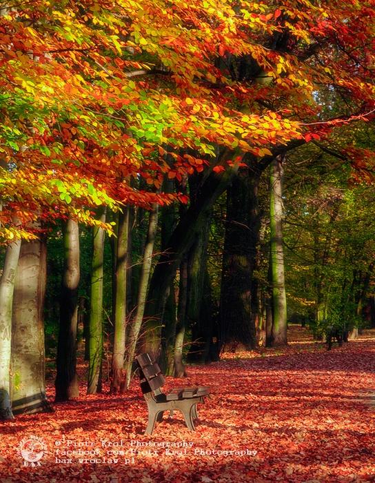 autumn2013_06