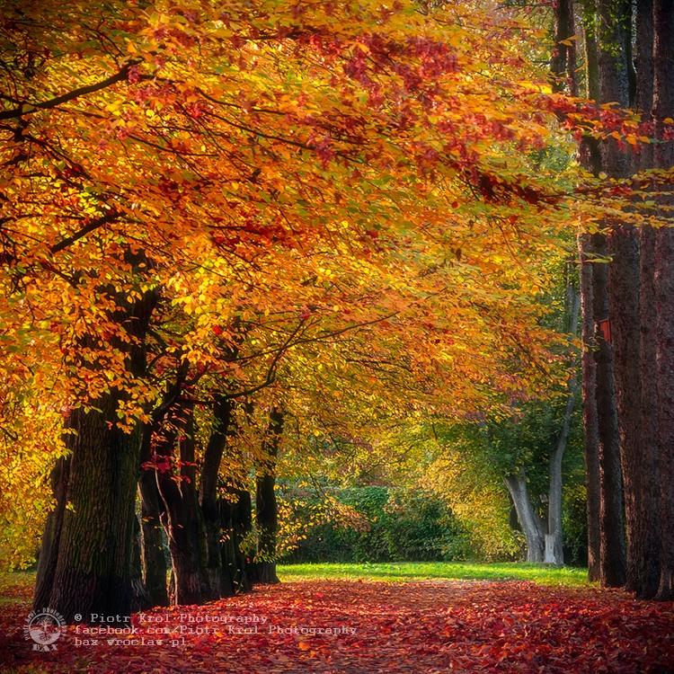 autumn2013_07