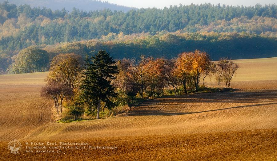 autumn2013_09
